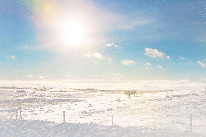 winter2015-9694r3web