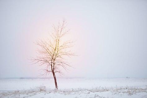 winter2015-9801gr3cd50web